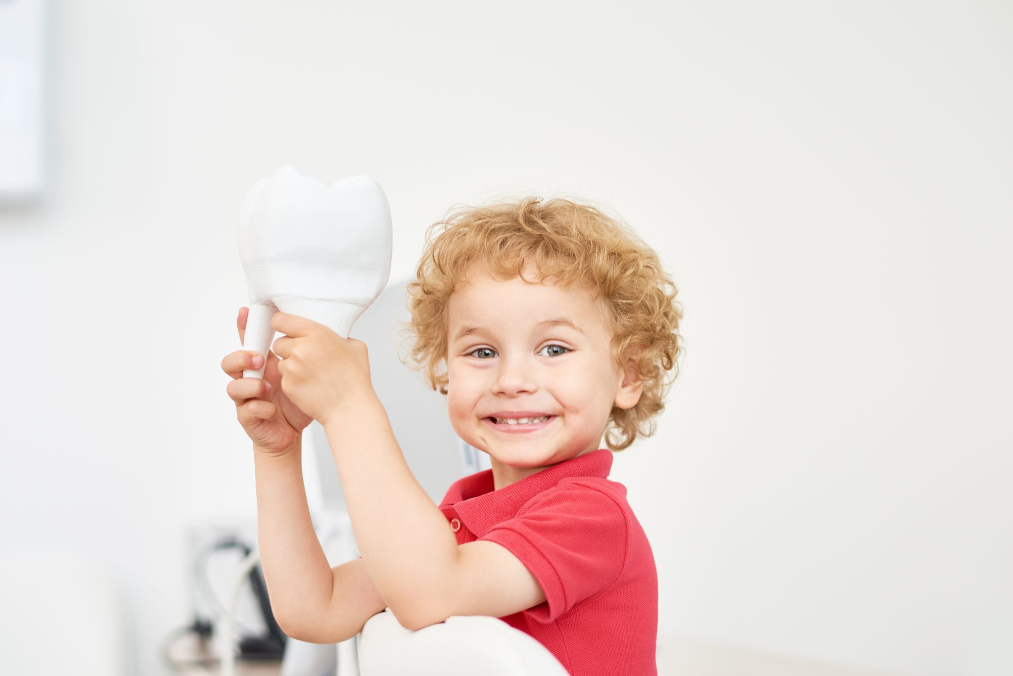 Head and shoulders portrait of cute toddler looking at camera while playing with tooth model at dental office, blurred background